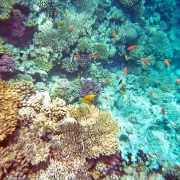 Diese beiden Bilder habe ich mit der DM Unterwassercamera gemacht.